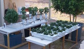 can find lots of free hydroponic system design plans like most people