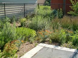 Rain garden - Wikipedia