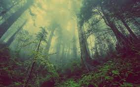 Forest Wallpapers ...
