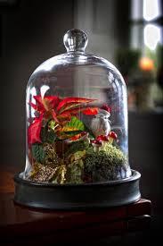 Waldlandschaft Unter Glasglocke Mit Moos Und Weihnachtsstern
