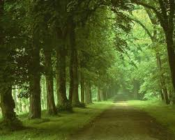 Cool Forest Backgrounds Best Forest 1920x1080 Px Wallpaper By Mendy