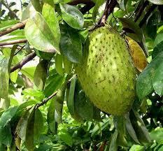 32 Best Food Jamaican Fruits U0026 Vegetables Images On Pinterest Jamaican Fruit Trees