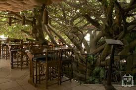 Tree House Restaurant | Tree House Restaurant, Monteverde. | My ...