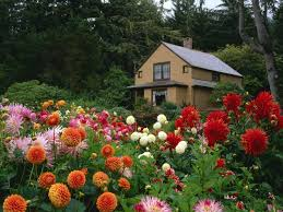 flowers garden trees house nature