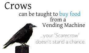 Crows Vending Machine Impressive Matt Flynn Information Security Identity Access Mgmt Crows