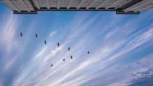 'Half a billion birds' die in US skyscraper collisions, study says | US  News | Sky News