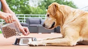 10 hábitos saludables para perros | Los Tiempos
