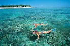 Afbeeldingsresultaat voor mnemba island snorkeling