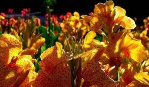 Presso il nostro negozio fiorista l'orchidea troverete la composizione floreale ideale per ogni occasione. Piante Con Fiori Gialli Pagina 3 Di 5