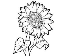 Disegno Di Un Girasole Da Colorare Acolorecom