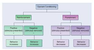 B F Skinner Operant Conditioning Theory Download