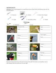 Evolution beaks modified worksheet