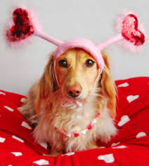 cute animal valentines day wallpaper. Plain Valentines Dogs Images Pretty Valentine Dog Wallpaper And Background Photos With Cute Animal Valentines Day Wallpaper