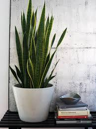 lighting indoor plants. house tours hipster atlanta home lighting indoor plants o