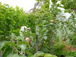 Small Picture Sustainable garden in Canberra Sustainable Gardening Australia