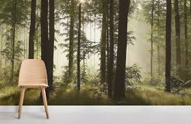 dusk mist forest forest room wall murals