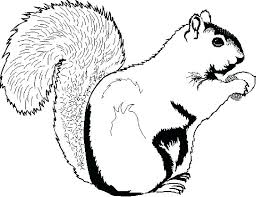 Squirrel Coloring Sheet Coloring Pages Of Squirrels Coloring Pages