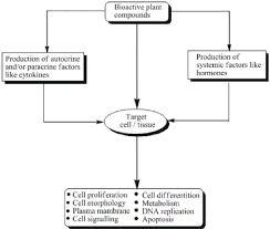 Flow Chart Showing Toxicity Due To Herbal Products 32