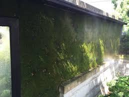 Moss Mats Moss Wall Moss Walls Living Wall Living Walls Green Wall Green