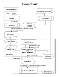 Identification Of Bacteria Flow Chart Edwardsiella Tarda