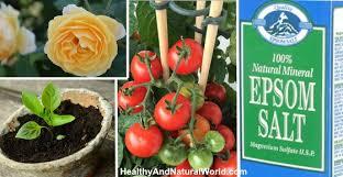 epsom salt gardening. the best uses for epsom salt in your garden gardening m