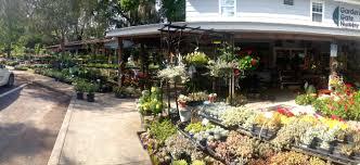 garden gate nursery in one descriptor beautiful sensory overload from perennials to natives vegetables herbs shrubs bonsai houseplants roses vines