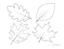 Maple Leaf Leaves Template And Holly Outline Flower Gum Free