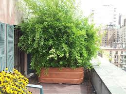 Growing bushy potted plants gives you the cover you need. It's an easy way  to improve privacy that also adds some foliage to your outdoor space.