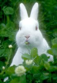 Image result for rabbits in clover