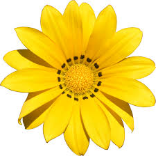 Image result for yellow sunflower cartoon