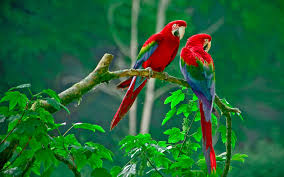 Flying Birds Hd Wallpapers On Pinterest ...