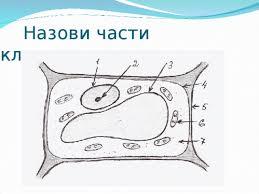 Итоговая контрольная по биологии класс Линия Пономаревой  hello html m115bda87 jpg