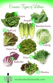 Lettuce Types Chart Dweh Lettuceguide600x932 In 2019 Types Of Lettuce