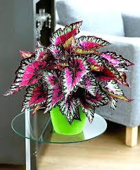 flowering houseplants for low light house plants low light best indoor flowering a fine specimen of