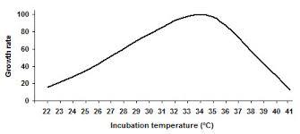 Incubation Temperature For Tempeh Fermentation
