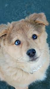 Cute Puppy Dog Poor Eyes iPhone 8 ...