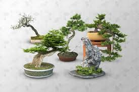 free 3d models bonsai trees