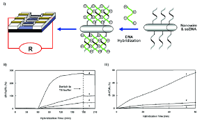 i a schematic representation of the design to use silicon nanowire i a schematic representation of the design to use silicon nanowire fet scientific diagram
