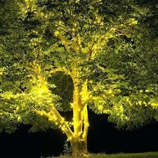 tree trunk wrap lights