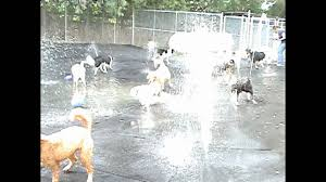 countryside s doggie splash pad