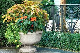 container plants for shade orange and green container garden shade loving outdoor container plants