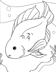 Reduced Free Printable Fish Coloring Pages Kid 13481