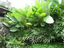 Small Picture Image result for tropical garden bed ideas Garden ideas