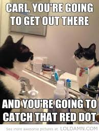 Funny cat memes The red dot from the lasers to make them run after ... via Relatably.com