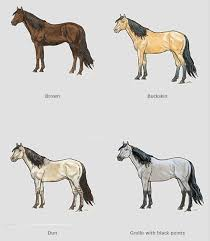 Foal Color Chart Wild Horse Body Color And Markings Chart For Identification