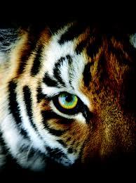 top 10 ways to save wildlife
