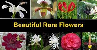 rare flowers that are absolutely