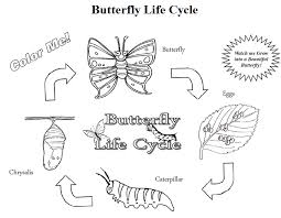 Small Picture Discount Butterfly Growing Kit FREE Butterfly Life Cycle