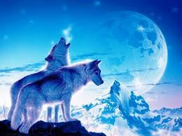 blue wolf background. Modren Wolf Blue Wolves Sky For Wolf Background 4