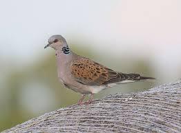 Warum ist der stieglitz vogel des jahres? Vogel Des Jahres Naturschutzbund Osterreich
